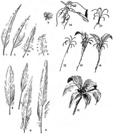 Как сделать цветы из перьев. Лилия, нарцис, ирис, ромашка, гвоздика, василёк и другие цветы.