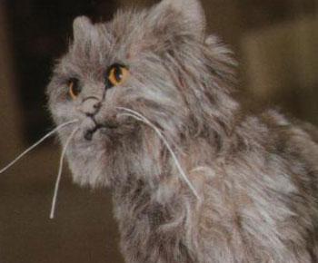 Шьём мягкую игрушку - очаровательного реалистичного кота. Выкройки, советы по шитью.