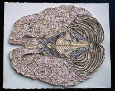 Квиллинг - анатомия.