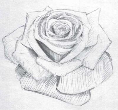 Уроки живописи карандашом. Роза.